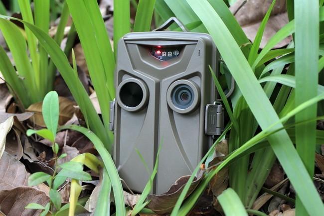 Caméra cachée dans les herbes